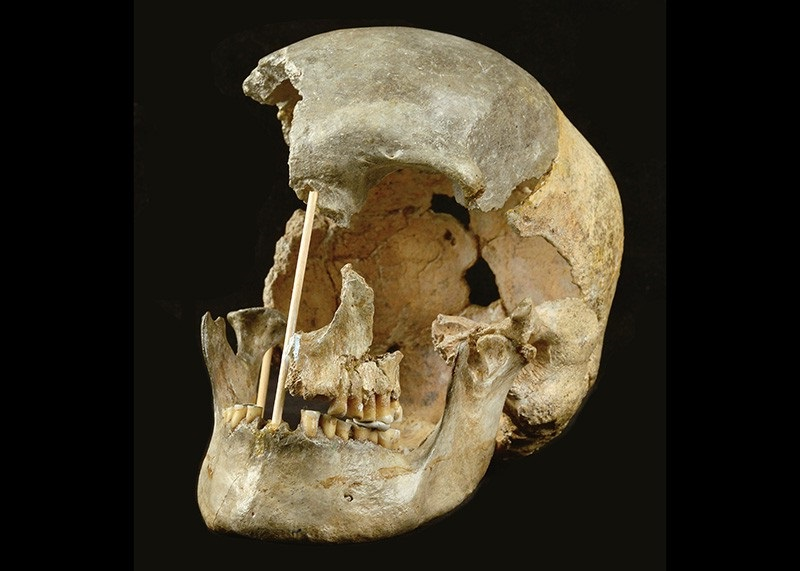 As a result, anyone outside of Africa carries about 2% to 3% Neandertal DNA. Those Neandertal DNA segments became progressively shorter in modern human genomes over time, and their length can be used to estimate when a person lived. Furthermore, archaeological evidence published last year suggests that modern humans were already present in southeastern Europe 47-43,000 years ago, but little is known about who these early human colonists were — or their relationships to ancient and modern human groups — due to a scarcity of fairly complete human fossils and the lack of genomic DNA.